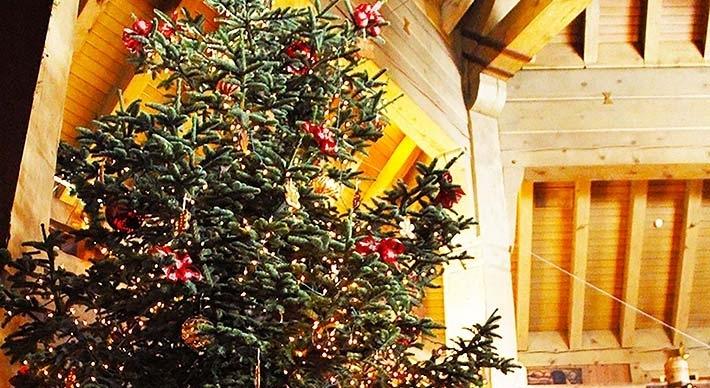 timberline christmas tree