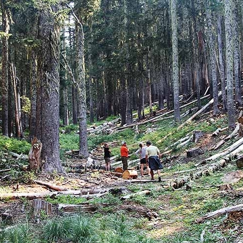 TIMBERLINE STEWARDSHIP AND SUSTAINABILITY